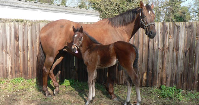 Sir Robert Cheval as a foal, part of our breeding syndicate