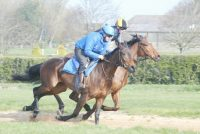 Poetic Lilly (nearside) looking a picture on the gallops