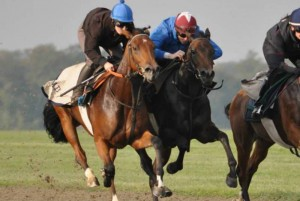 Gentlemusic on the Newmarket gallops with Marco Botti