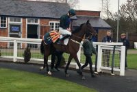 Waikiki Waves looking a picture as he leaves the Parade Ring