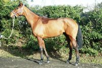 Alternate Route – our new National Hunt prospect!
