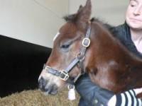 A beautiful colt