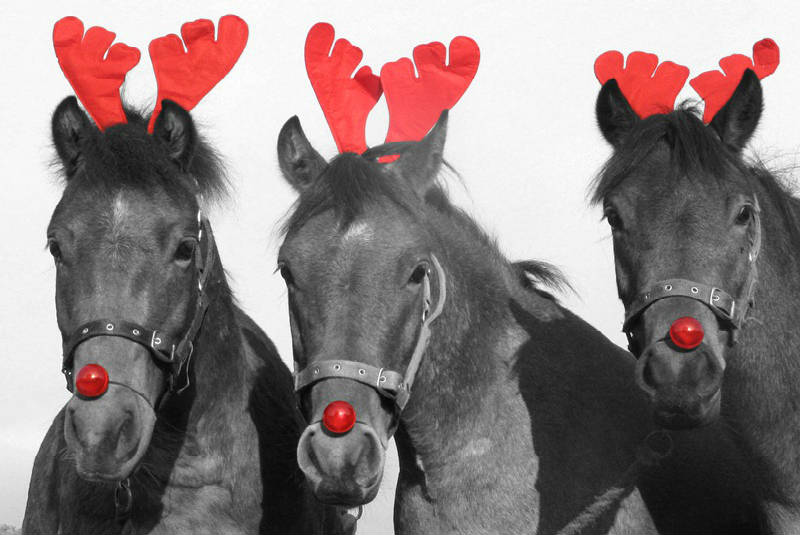 Christmas Horse Racing.Christmas Gifts For Racing Fans Heart Of The South Racing