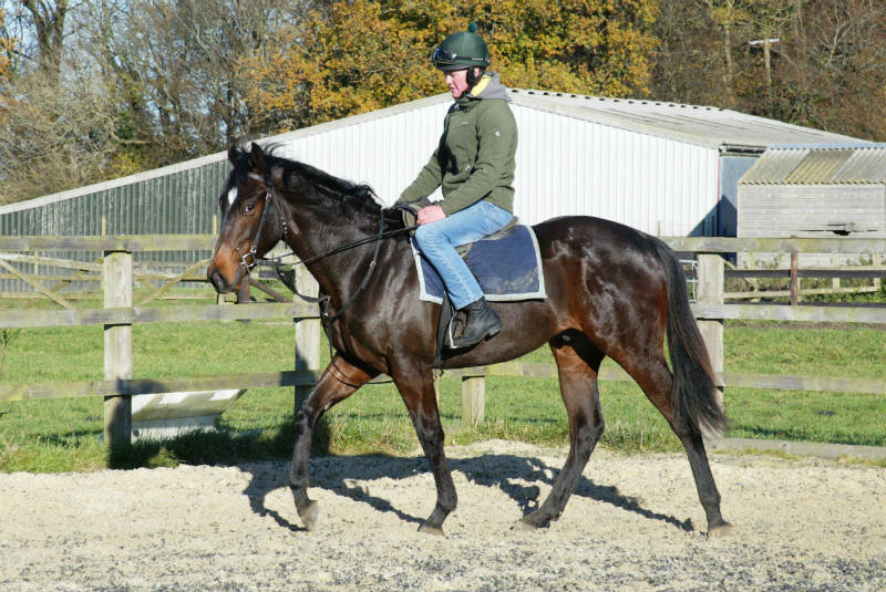Cantering confidently with a rider on his back