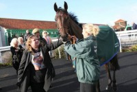 Good Luck Charm is loved dearly by so many of his owners