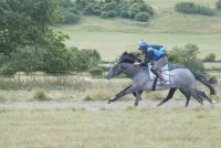 Onehelluvatouch striding out beautifully on the gallops