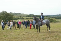 A busy morning on the findon gallops for our naming morning!