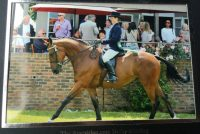 Impy finishing a very creditable 4th in the Hickstead Main Ring for Champions