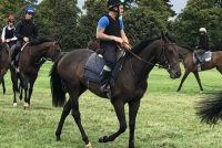 Latin Knight after his encouraging work on the grass gallops