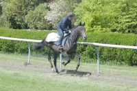 Latin Knight being put through his paces on the Newmarket gallops