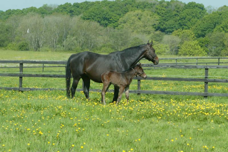 Mum and foal enjoying a pick of grass
