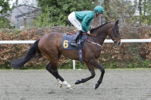 Mohanad was beautifully turned out and looks a picture of health heading down to post