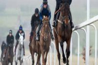 Just one of the fantastic gallops on offer at the Lambourn Downs