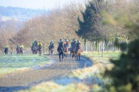 Horses working up the 6 furlong gallop