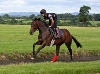 Gallops set in the beautiful Sussex countryside
