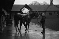 A wash down for a horse at Gary's yard
