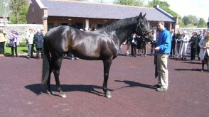 Owners meet several stallions