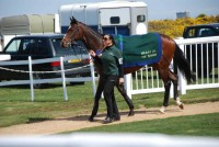 This beautiful Galileo horse Amen, in the parade ring before the hurdle race