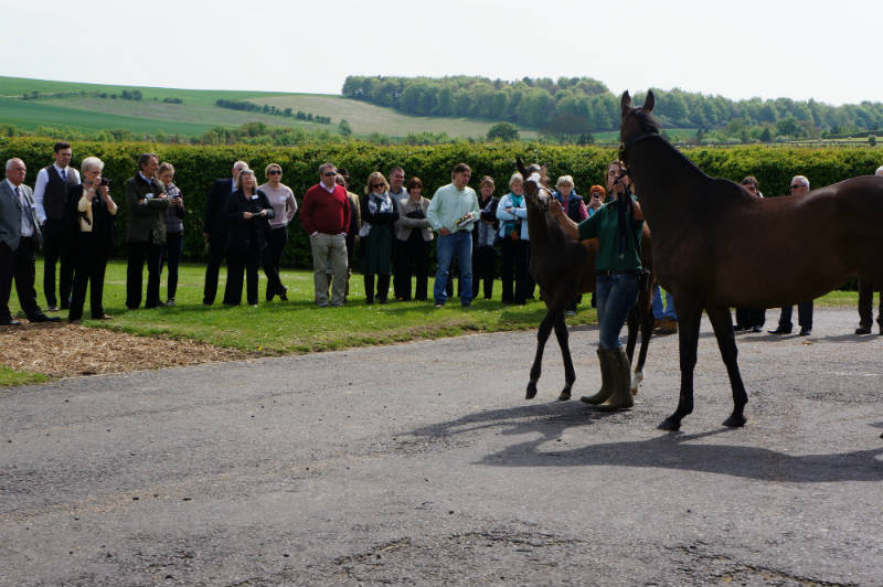 Owners meet some mares and their foals - including one of the almighty Frankel's offspring