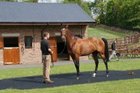 A fine specimen of a racehorse, dual Group 1 winner Nathaniel