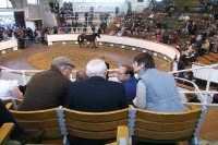 Tattersalls Millions Sale and a morning at the National Stud