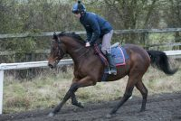 Our 2-year old colt by Poet's Voice in training with Robert for the season ahead