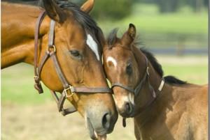 racehorse-ownership-breeding