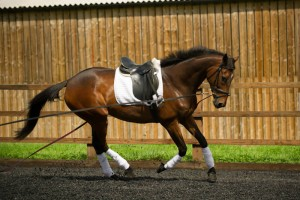 racehorse-ownership-retraining