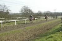 Horses cantering up the 7 furlong polytrack