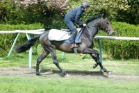 Latin Knight – an exceedingly well bred colt