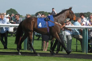 Shamahan wins at Bath and looks a picture in the parade ring