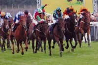 South Cape leads the field in the final furlong