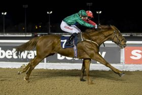 Velvet Revolution snatches his fourth victory on the line at Wolverhampton